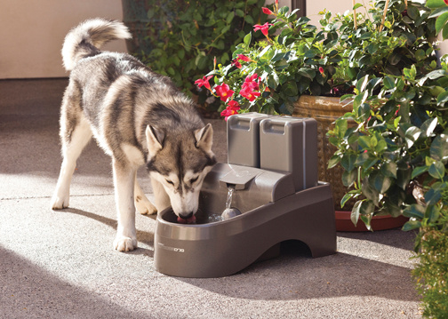 Drinkwell 174 Outdoor Dog Fountain By Petsafe Ddog Inout